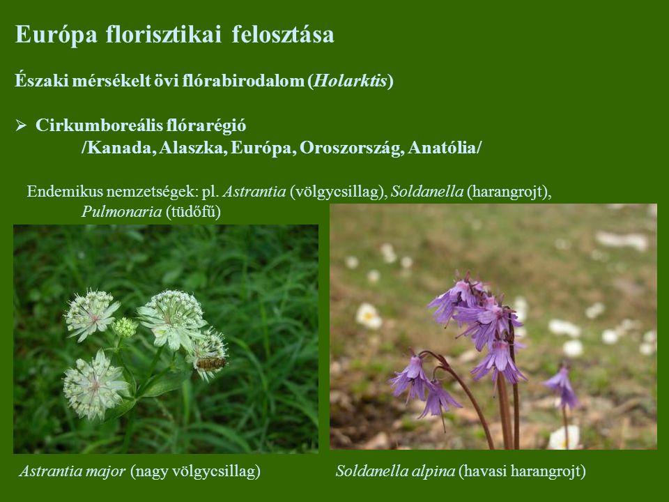 Európa florisztikai felosztása Északi mérsékelt övi flórabirodalom (Holarktis)  Cirkumboreális flórarégió /Kanada, Alaszka, Európa, Oroszország, Anatólia/ Endemikus nemzetségek: pl.