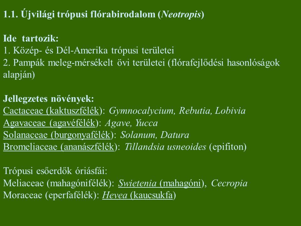 1.1. Újvilági trópusi flórabirodalom (Neotropis) Ide tartozik: 1. Közép- és Dél-Amerika trópusi területei 2. Pampák meleg-mérsékelt övi területei (fló
