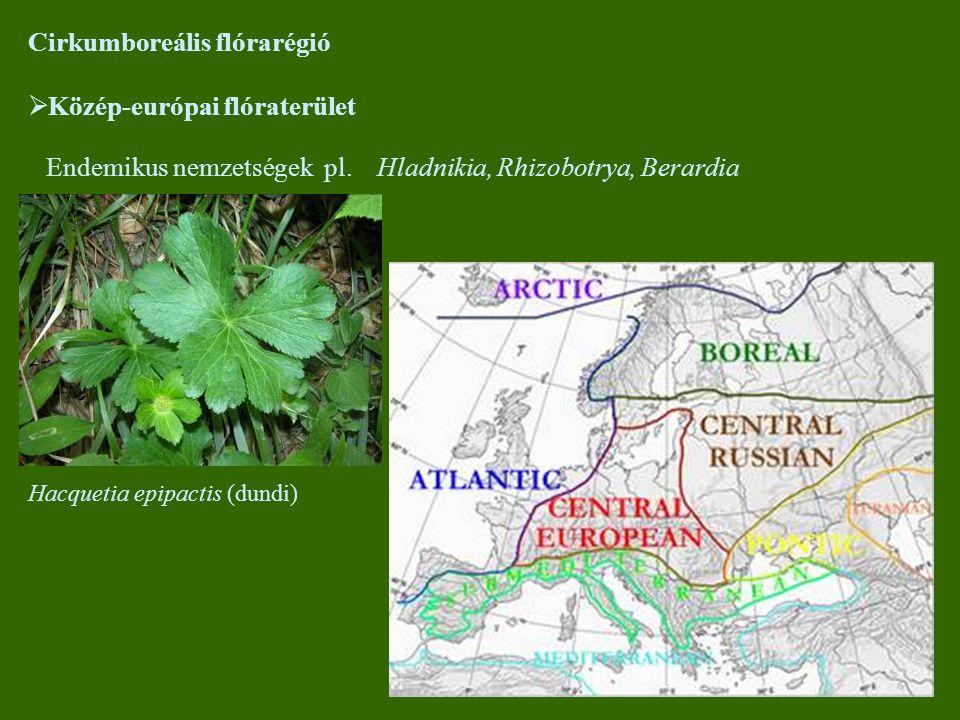 Cirkumboreális flórarégió  Közép-európai flóraterület Endemikus nemzetségek pl. Hladnikia, Rhizobotrya, Berardia Hacquetia epipactis (dundi)