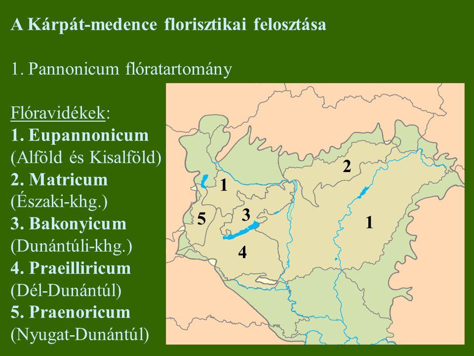 A Kárpát-medence florisztikai felosztása 1.Pannonicum flóratartomány Flóravidékek: 1.Eupannonicum (Alföld és Kisalföld) 2. Matricum (Északi-khg.) 3. B
