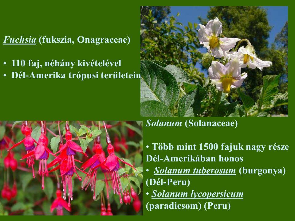 Fuchsia (fukszia, Onagraceae) 110 faj, néhány kivételével Dél-Amerika trópusi területein Solanum (Solanaceae) Több mint 1500 fajuk nagy része Dél-Amerikában honos Solanum tuberosum (burgonya) (Dél-Peru) Solanum lycopersicum (paradicsom) (Peru)