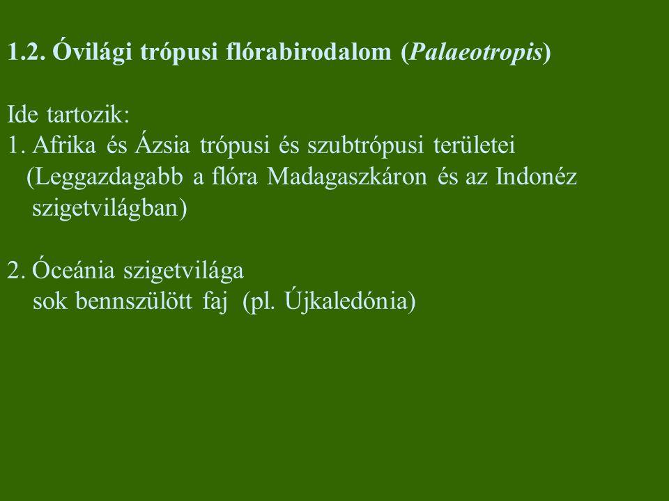 A Palaeotropis jellegzetes növényei Afrikai trópusi esőerdők óriásfái: Meliaceae (mahagónifélék): Entandophragma, Khaya Mimosaceae (mimózafélék): Newtonia Euphorbiaceae (kutyatejfélék): Macaranga Ázsiai trópusi esőerdők óriásfái: Dipterocarpaceae (dipterokarpuszfélék) Anacardiaceae (szömörcefélék) Dilleniaceae (dilléniafélék) Egyéb növénycsoportok: Araliaceae (borostyánfélék) Moraceae (eperfafélék): több mint 1000 Ficus faj Balsaminaceae (nebáncsvirágfélék): sok Impatiens (nebáncsvirág) faj Epifitonok: Loranthaceae (fagyöngyfélék): kb.