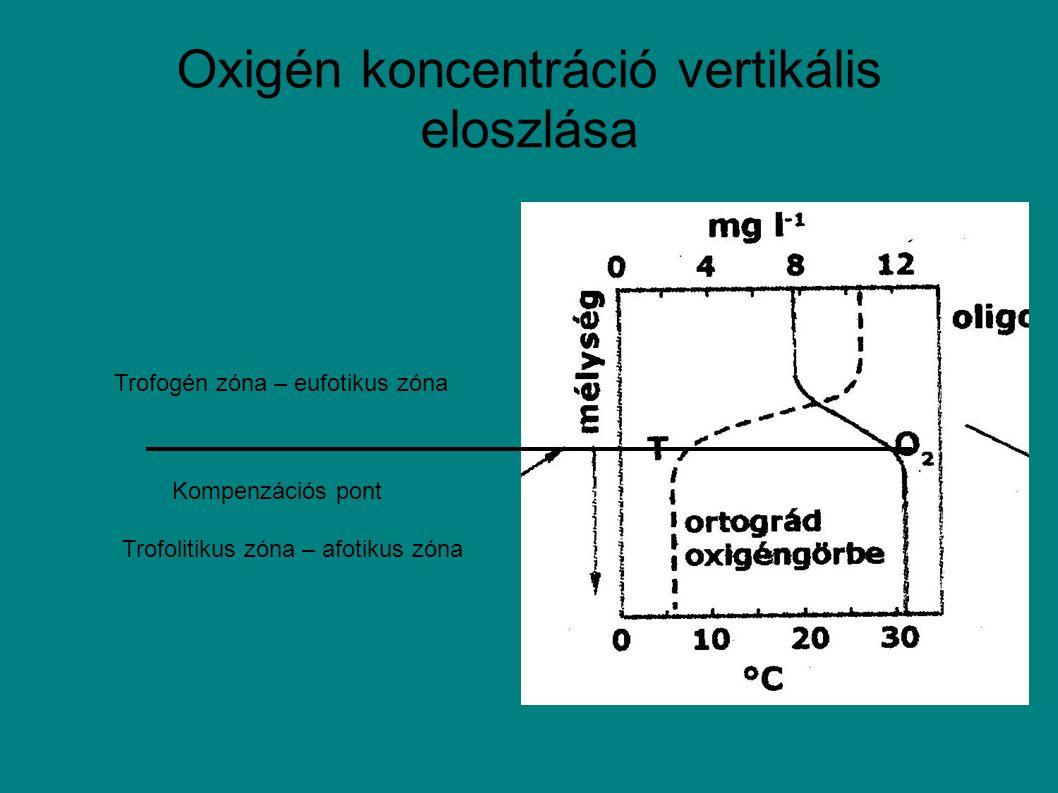 Oxigén koncentráció vertikális eloszlása Trofogén zóna – eufotikus zóna Trofolitikus zóna – afotikus zóna Kompenzációs pont