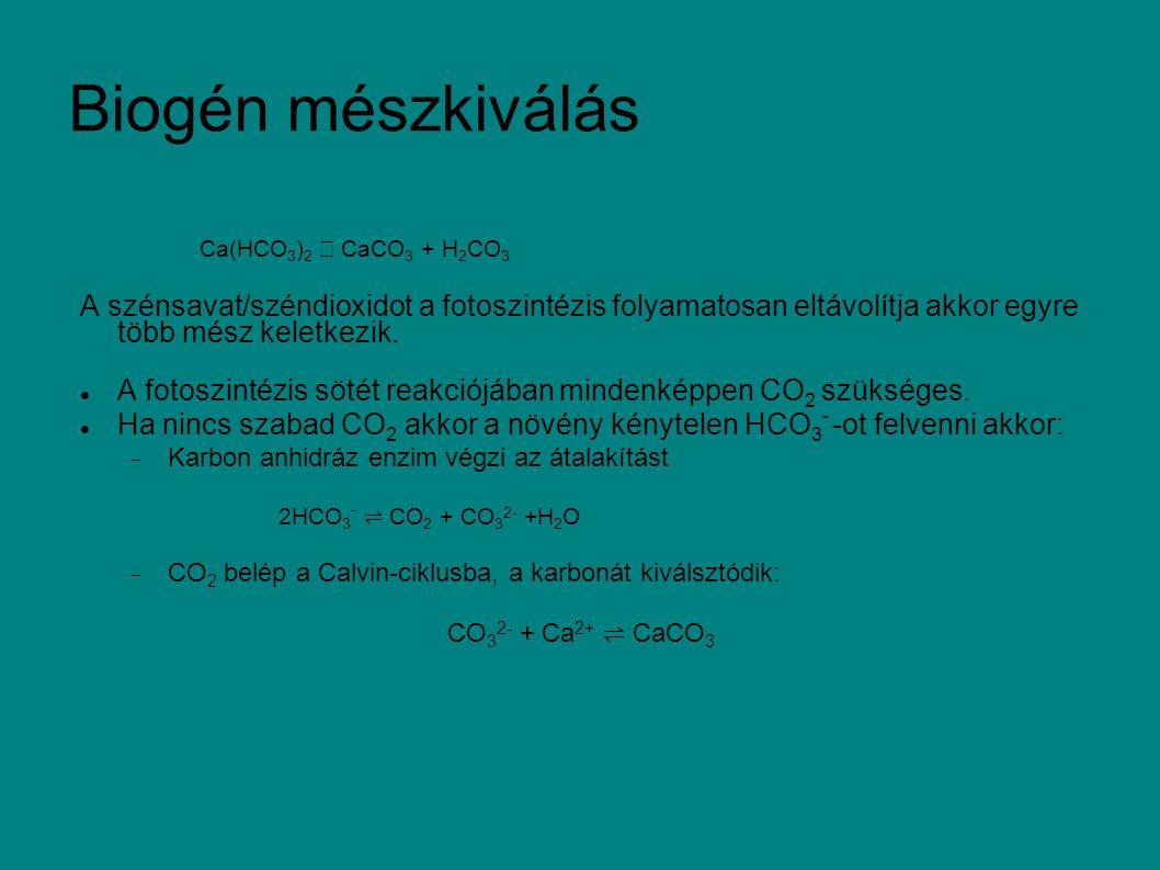 Biogén mészkiválás Ca(HCO 3 ) 2 → CaCO 3 + H 2 CO 3 A szénsavat/széndioxidot a fotoszintézis folyamatosan eltávolítja akkor egyre több mész keletkezik