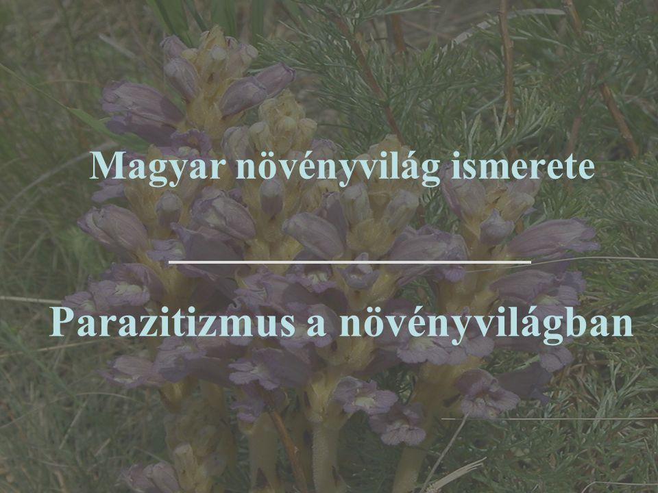 Recés szádorgó (Orobanche reticulata) Gazdanövény: fészkesek (Asteraceae): aszat (Cirsium) és bogáncs (Carduus) fajok Élőhely: száraz gyepek, legelők, gyomtársulások IUCN: NT