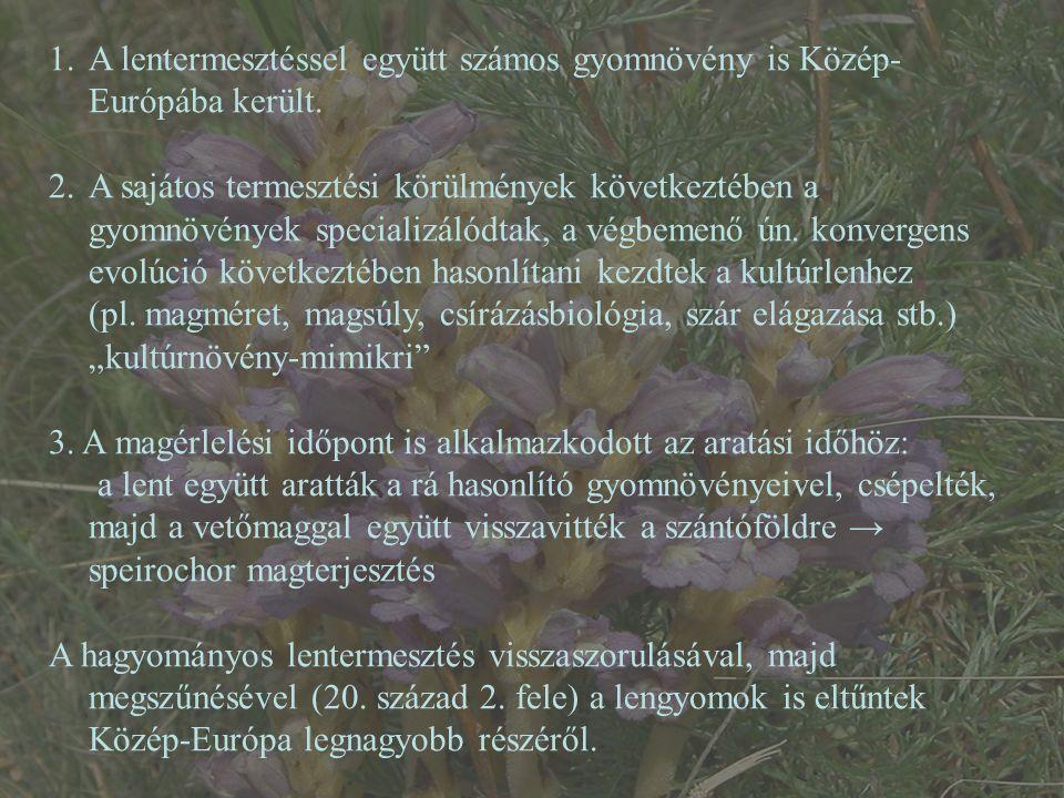 1.A lentermesztéssel együtt számos gyomnövény is Közép- Európába került. 2.A sajátos termesztési körülmények következtében a gyomnövények specializáló