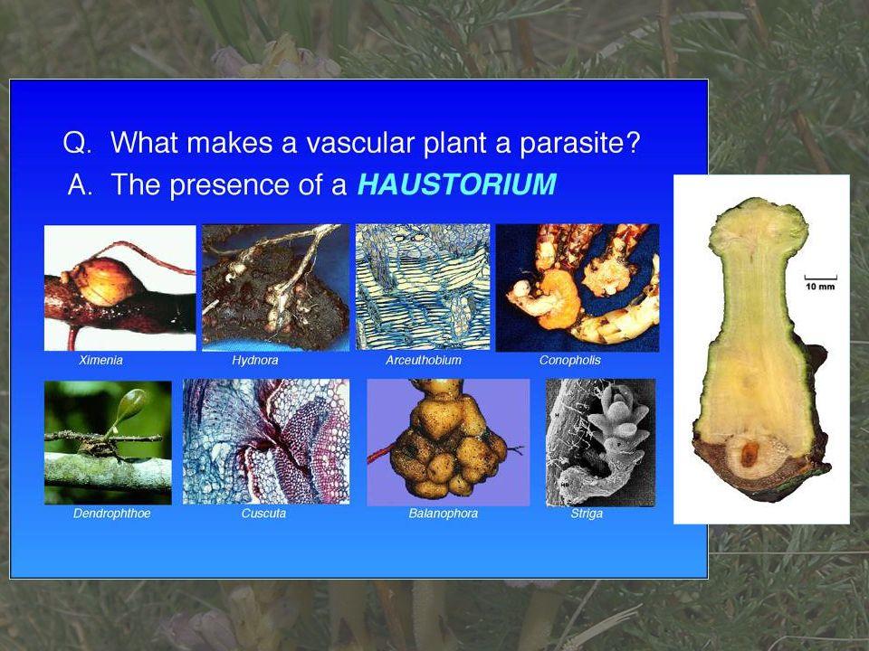 További felosztás: Obligát paraziták: Az élősködő növény nem képes életciklusát befejezni a gazdanövénye nélkül (minden holoparazita faj + néhány epifiton hemiparazita, pl.