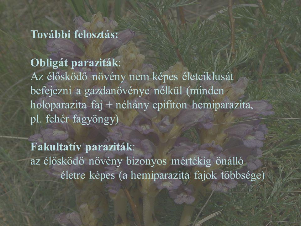 Parazita növények: 1.Boraginales (Lennoaceae) 2.Cucurbitales (Apodanthaceae) 3.Ericales (Mitrastemonaceae) 4.Lamiales (Orobanchaceae) – nálunk 42 faj 5.Laurales (Lauraceae - Cassytha) 6.Malpighiales (Rafflesiaceae) 7.Malvales (Cytinaceae - Cytinus) 8.Piperales (Hydnoraceae) 9.Santalales (20 növénycsalád, nálunk: Loranthaceae – 2 faj, Santalaceae – 4 faj) 10.