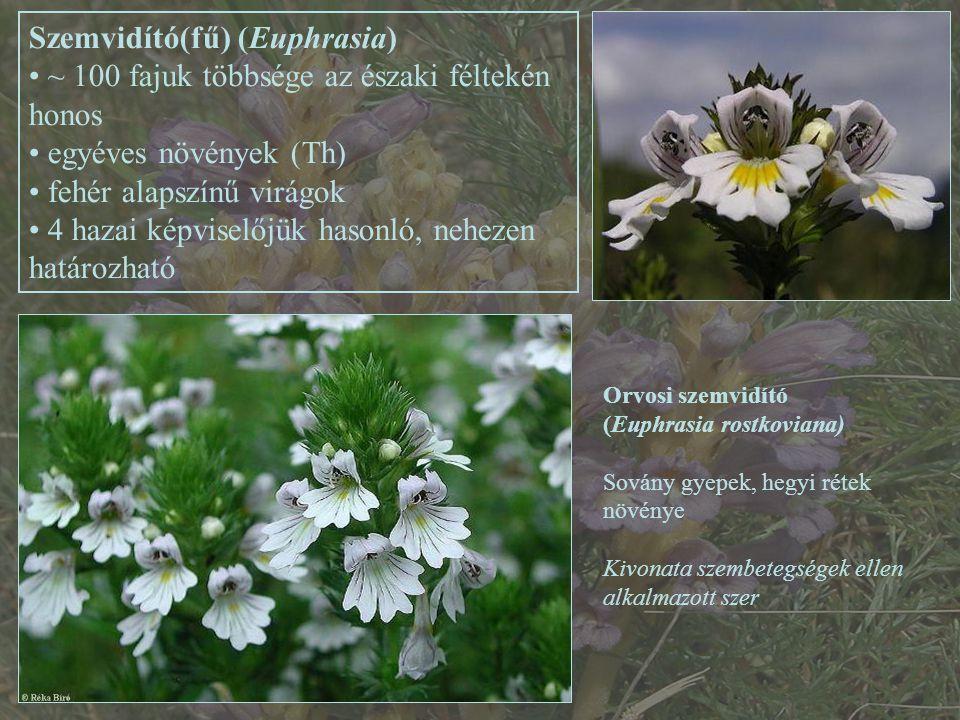 Szemvidító(fű) (Euphrasia) ~ 100 fajuk többsége az északi féltekén honos egyéves növények (Th) fehér alapszínű virágok 4 hazai képviselőjük hasonló, nehezen határozható Orvosi szemvidító (Euphrasia rostkoviana) Sovány gyepek, hegyi rétek növénye Kivonata szembetegségek ellen alkalmazott szer