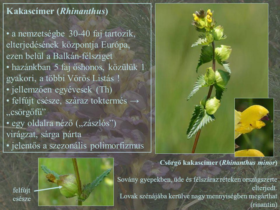 Kakascímer (Rhinanthus) a nemzetségbe 30-40 faj tartozik, elterjedésének központja Európa, ezen belül a Balkán-félsziget hazánkban 5 faj őshonos, közülük 1 gyakori, a többi Vörös Listás .