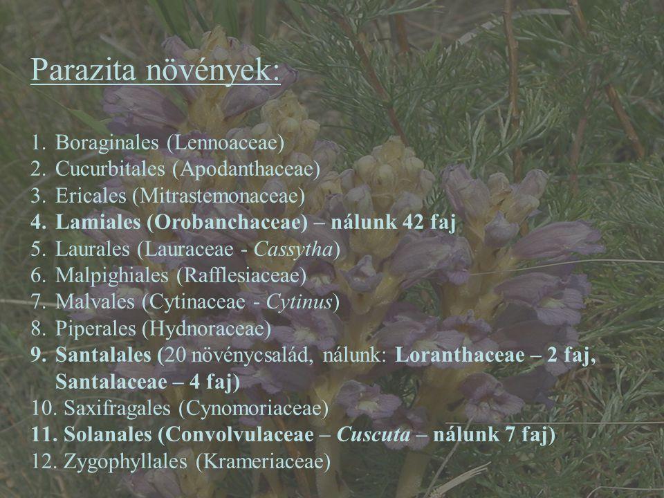 Parazita növények: 1.Boraginales (Lennoaceae) 2.Cucurbitales (Apodanthaceae) 3.Ericales (Mitrastemonaceae) 4.Lamiales (Orobanchaceae) – nálunk 42 faj
