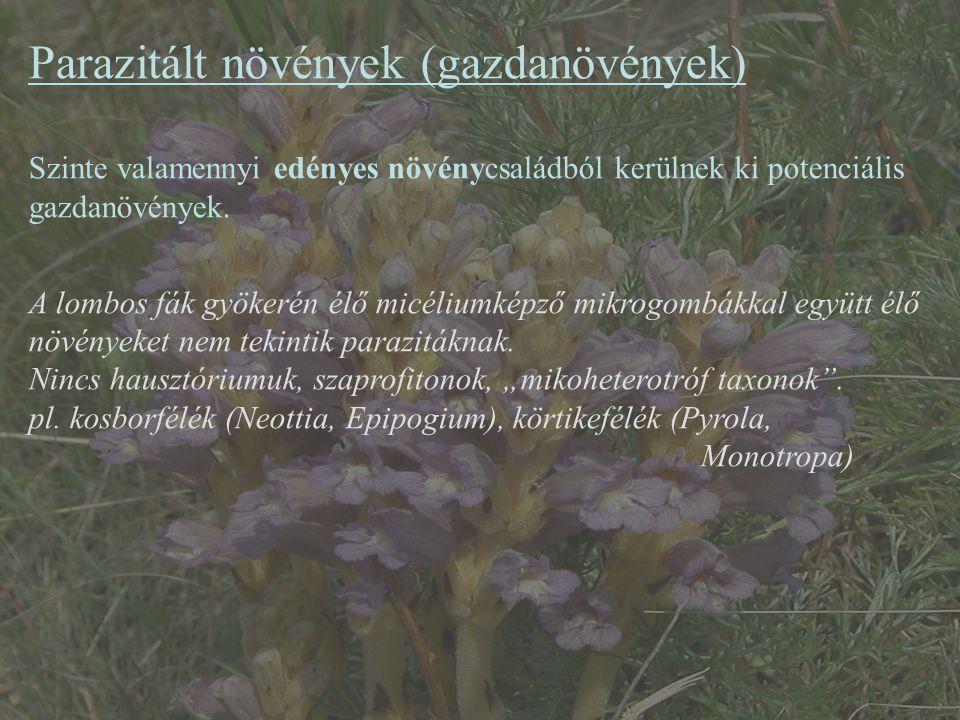 Parazitált növények (gazdanövények) Szinte valamennyi edényes növénycsaládból kerülnek ki potenciális gazdanövények. A lombos fák gyökerén élő micéliu