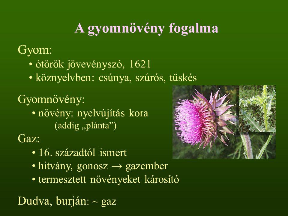 """A gyomnövény fogalma Gyom: ótörök jövevényszó, 1621 köznyelvben: csúnya, szúrós, tüskés Gyomnövény: növény: nyelvújítás kora (addig """"plánta"""") Gaz: 16."""