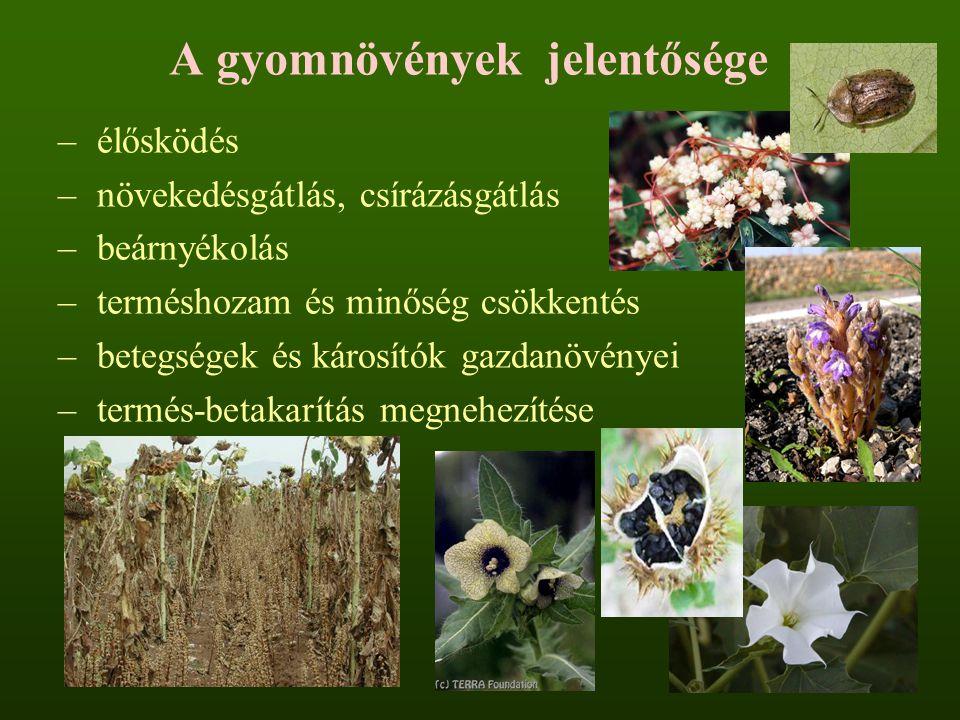 A gyomnövények jelentősége – élősködés – növekedésgátlás, csírázásgátlás – beárnyékolás – terméshozam és minőség csökkentés – betegségek és károsítók