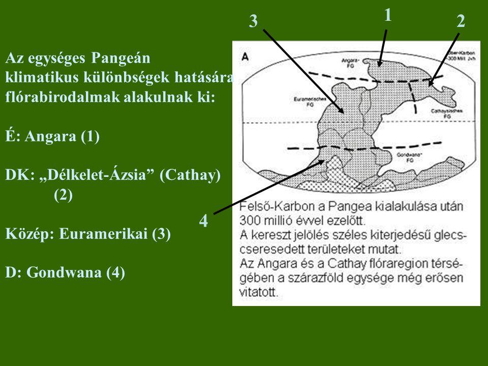 """Az egységes Pangeán klimatikus különbségek hatására flórabirodalmak alakulnak ki: É: Angara (1) DK: """"Délkelet-Ázsia"""" (Cathay) (2) Közép: Euramerikai ("""