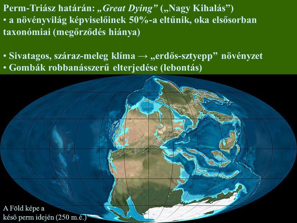"""Perm-Triász határán: """"Great Dying"""" (""""Nagy Kihalás"""") a növényvilág képviselőinek 50%-a eltűnik, oka elsősorban taxonómiai (megőrződés hiánya) Sivatagos"""