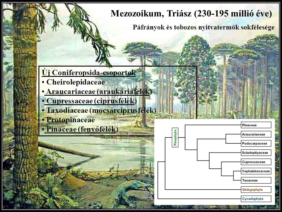 Mezozoikum, Triász (230-195 millió éve) Új Coniferopsida-csoportok Cheirolepidaceae Araucariaceae (araukáriafélék) Cupressaceae (ciprusfélék) Taxodiac