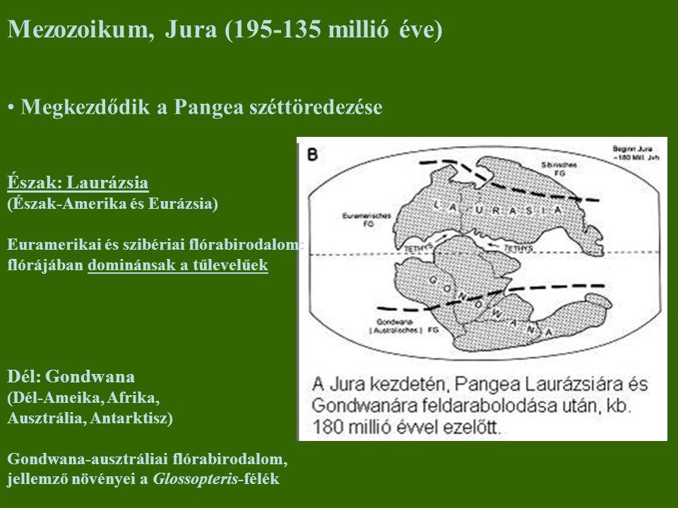 Dél: Gondwana (Dél-Ameika, Afrika, Ausztrália, Antarktisz) Gondwana-ausztráliai flórabirodalom, jellemző növényei a Glossopteris-félék Megkezdődik a P