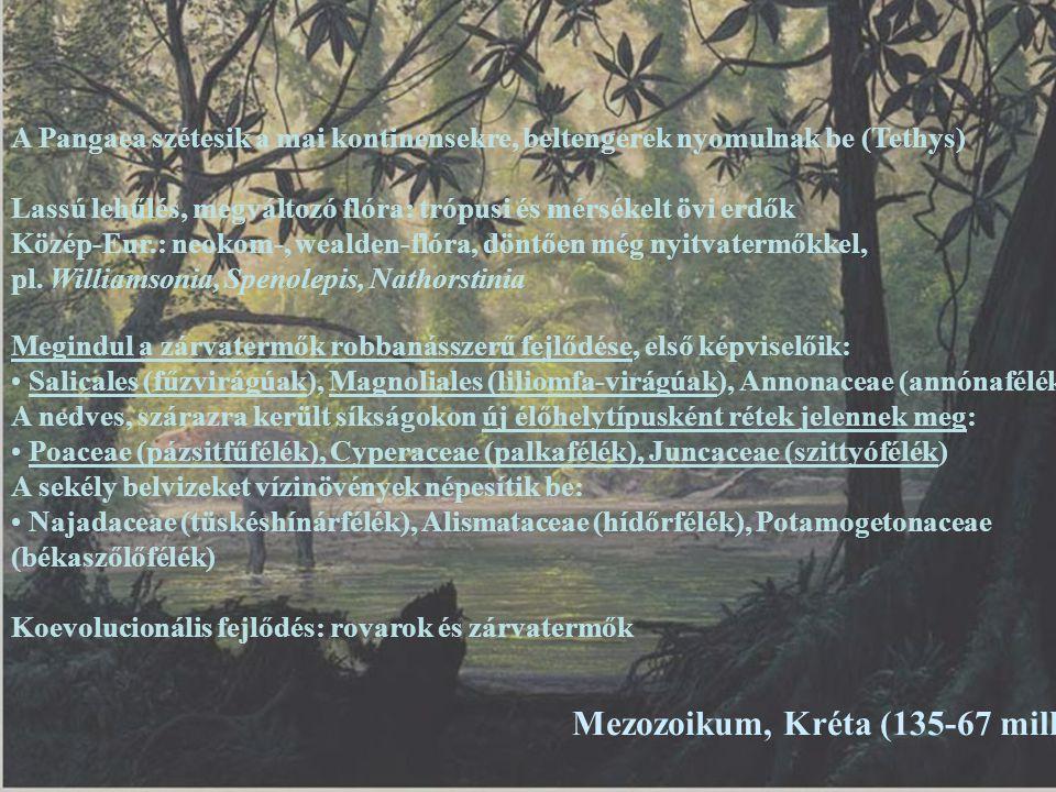 Mezozoikum, Kréta (135-67 millió éve) Megindul a zárvatermők robbanásszerű fejlődése, első képviselőik: Salicales (fűzvirágúak), Magnoliales (liliomfa
