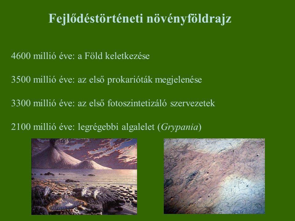 Paleozoikum: Kambrium (570-500 millió éve) Chlorophyta (zöld-) és Rhodophyta (vörösmoszatok) törzs diverzifikációja a tengerekben, más algák (Phaeophyta - Barnamoszatok) felbukkanása Paleozoikum: Ordovícium (500-440 millió éve) Szárazföldi és vízi zöld növények evolúciójának szétválása Legősibb spóraleletek Mohák és gombák megjelenése és elterjedése, az időszak végén a szárazföldön is 1.