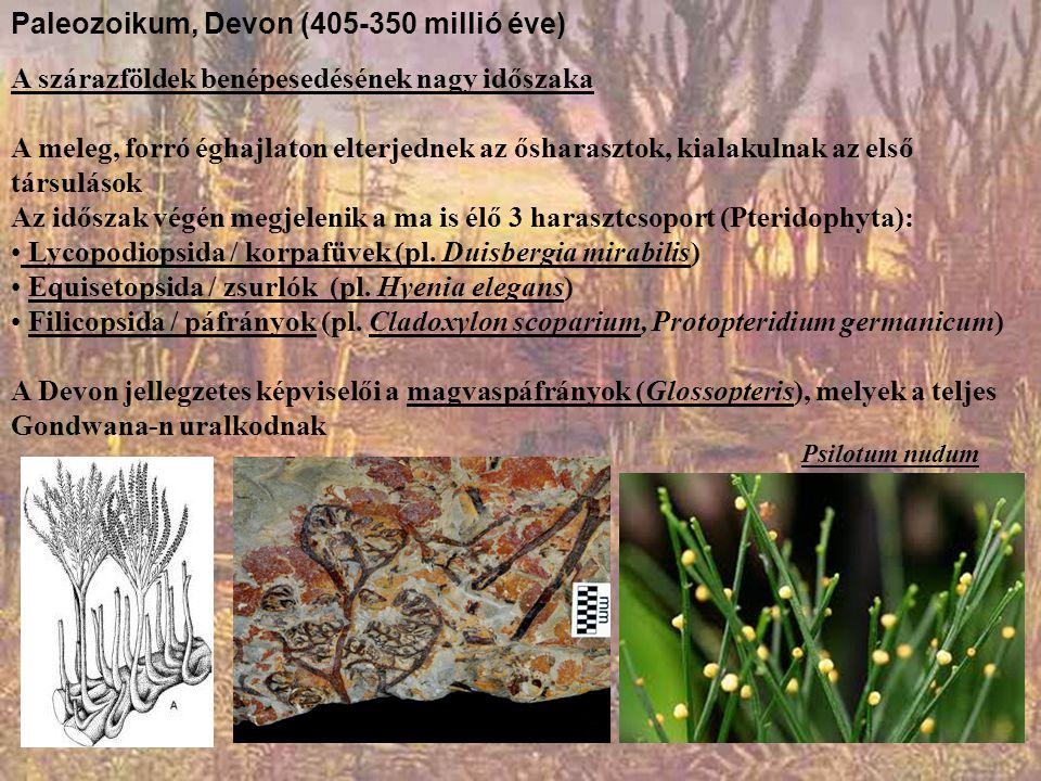 Paleozoikum, Devon (405-350 millió éve) A szárazföldek benépesedésének nagy időszaka A meleg, forró éghajlaton elterjednek az ősharasztok, kialakulnak