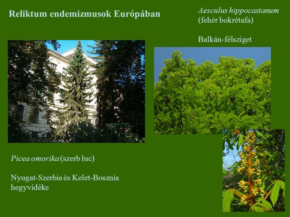 Reliktum endemizmusok Európában Picea omorika (szerb luc) Nyugat-Szerbia és Kelet-Bosznia hegyvidéke Aesculus hippocastanum (fehér bokrétafa) Balkán-f