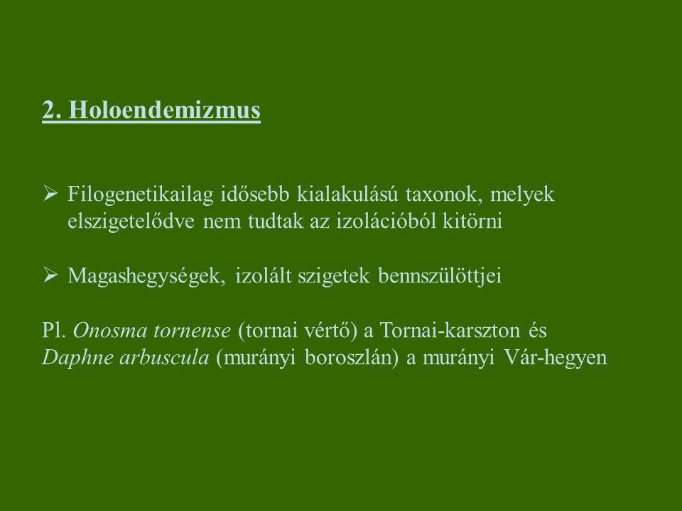 2. Holoendemizmus  Filogenetikailag idősebb kialakulású taxonok, melyek elszigetelődve nem tudtak az izolációból kitörni  Magashegységek, izolált sz