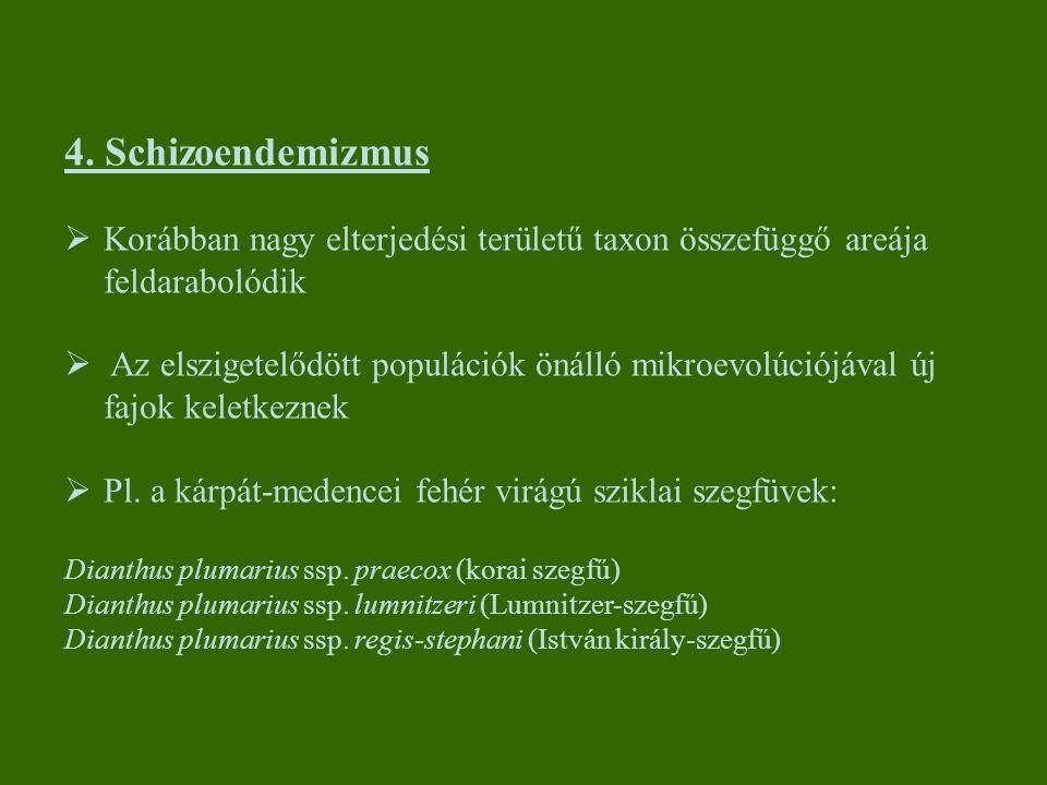 4. Schizoendemizmus  Korábban nagy elterjedési területű taxon összefüggő areája feldarabolódik  Az elszigetelődött populációk önálló mikroevolúciójá