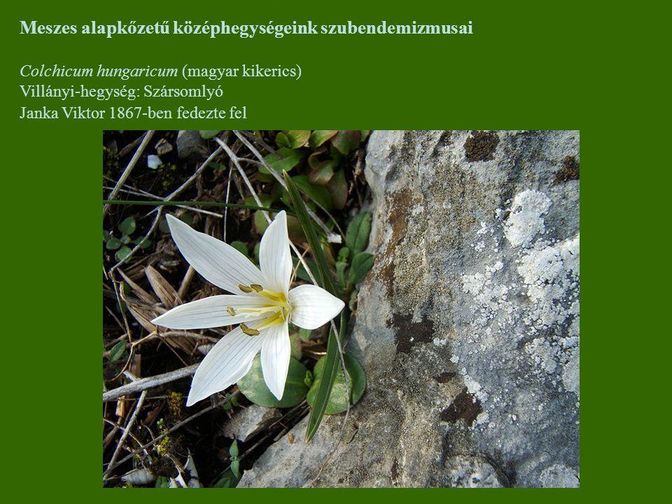 Meszes alapkőzetű középhegységeink szubendemizmusai Colchicum hungaricum (magyar kikerics) Villányi-hegység: Szársomlyó Janka Viktor 1867-ben fedezte