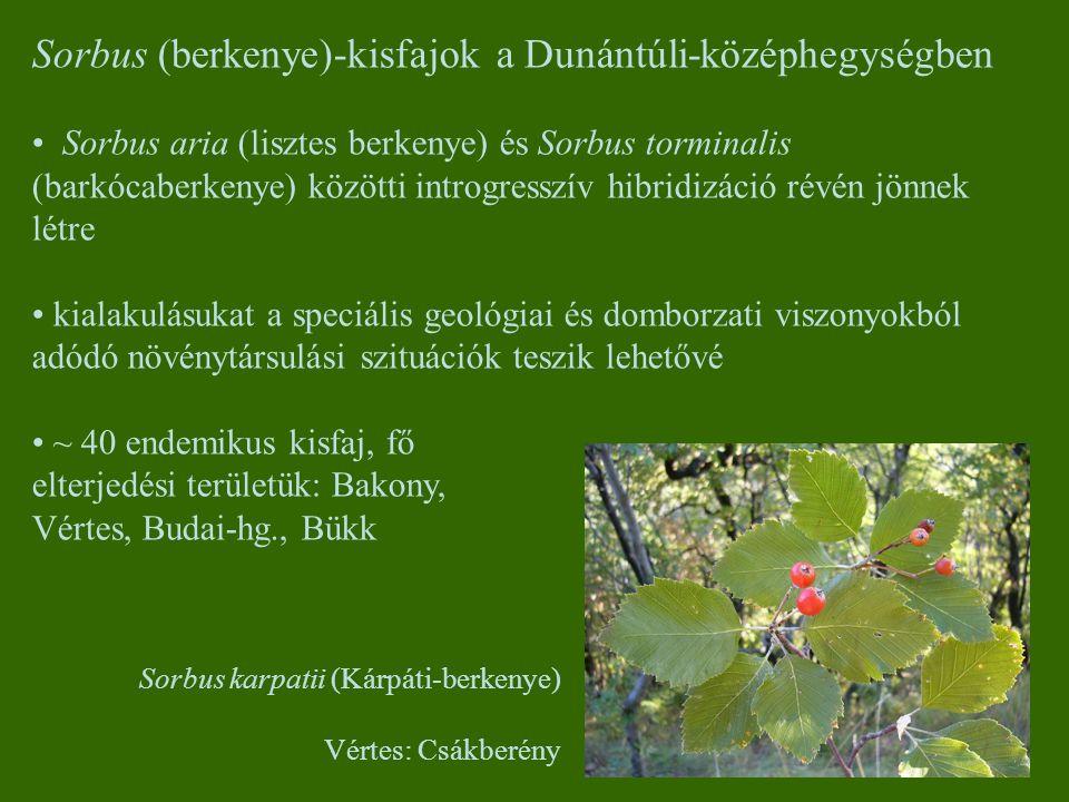 Sorbus (berkenye)-kisfajok a Dunántúli-középhegységben Sorbus aria (lisztes berkenye) és Sorbus torminalis (barkócaberkenye) közötti introgresszív hib