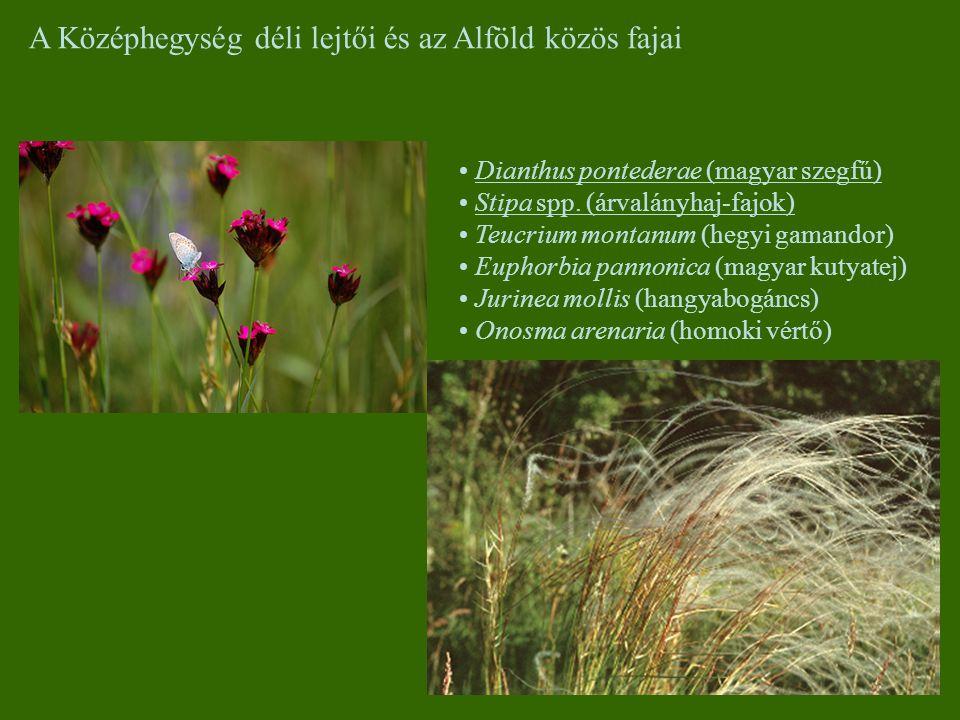 A Középhegység déli lejtői és az Alföld közös fajai Dianthus pontederae (magyar szegfű) Stipa spp. (árvalányhaj-fajok) Teucrium montanum (hegyi gamand