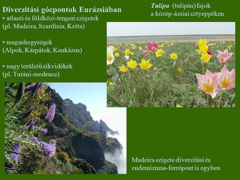 Diverzitási gócpontok Eurázsiában atlanti és földközi-tengeri szigetek (pl. Madeira, Szardínia, Kréta) magashegységek (Alpok, Kárpátok, Kaukázus) nagy