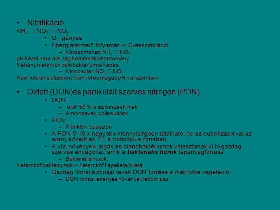 Nitrifikáció NH 4 + → NO 2 - → NO 3 - O 2 igényes Energiatermelő folyamat -> C-asszimiláció –Nitrosomonas: NH 4 + → NO 2 - pH közel neutrális, tág hóm