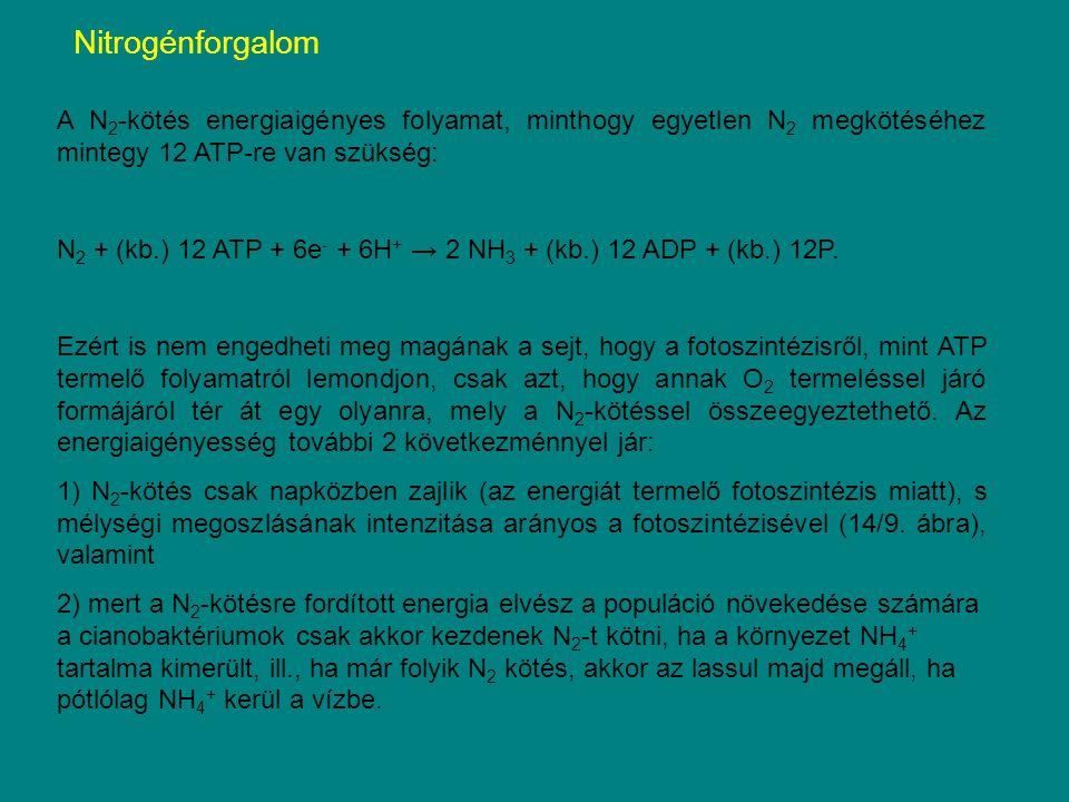 A N 2 -kötés energiaigényes folyamat, minthogy egyetlen N 2 megkötéséhez mintegy 12 ATP-re van szükség: N 2 + (kb.) 12 ATP + 6e - + 6H + → 2 NH 3 + (k