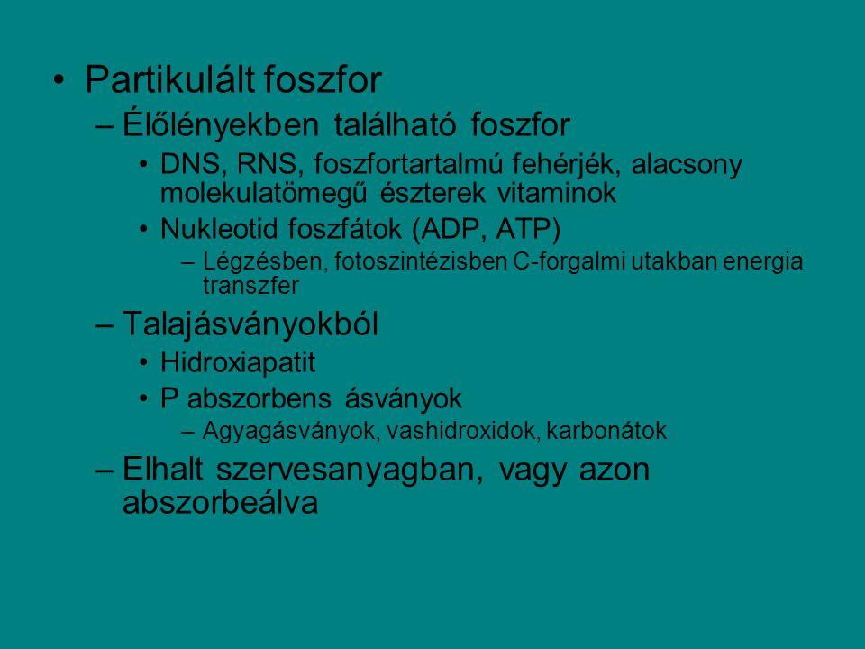 Partikulált foszfor –Élőlényekben található foszfor DNS, RNS, foszfortartalmú fehérjék, alacsony molekulatömegű észterek vitaminok Nukleotid foszfátok