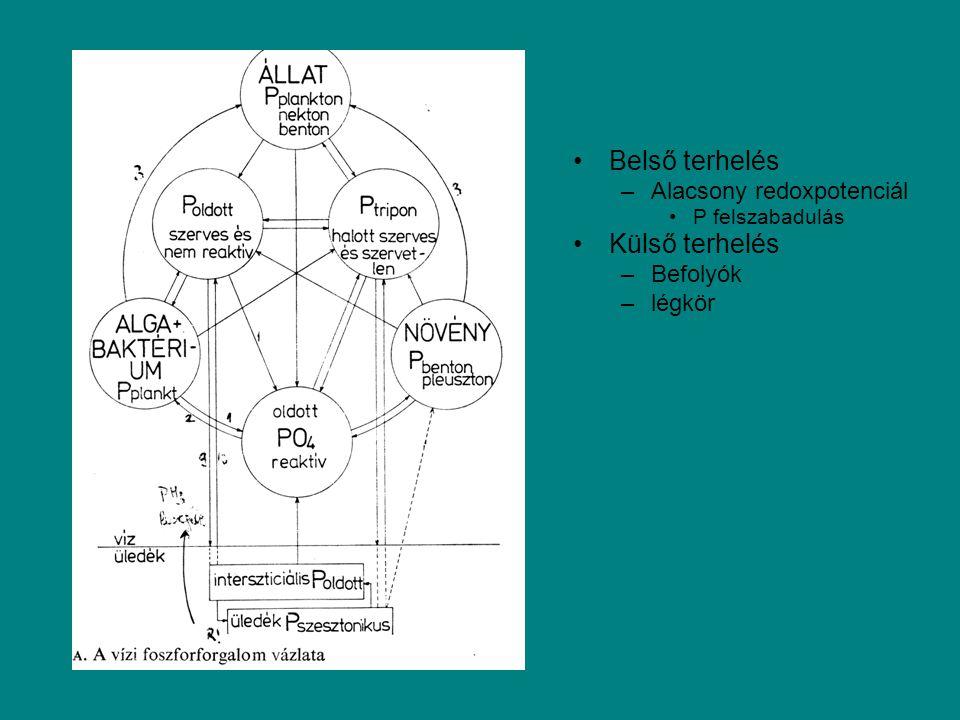 Belső terhelés –Alacsony redoxpotenciál P felszabadulás Külső terhelés –Befolyók –légkör