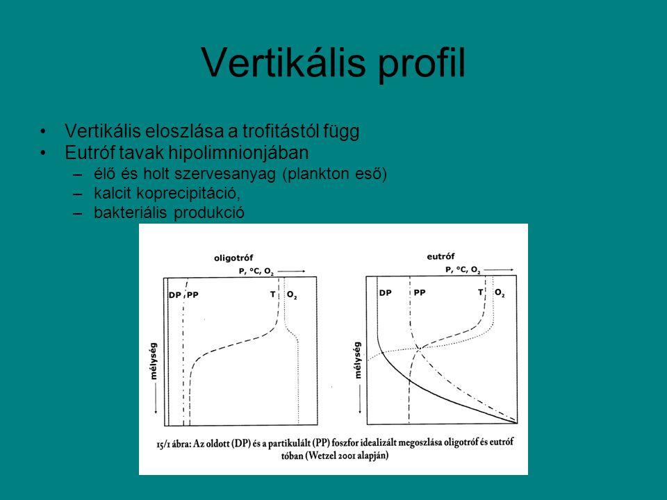 Vertikális profil Vertikális eloszlása a trofitástól függ Eutróf tavak hipolimnionjában –élő és holt szervesanyag (plankton eső) –kalcit koprecipitáci