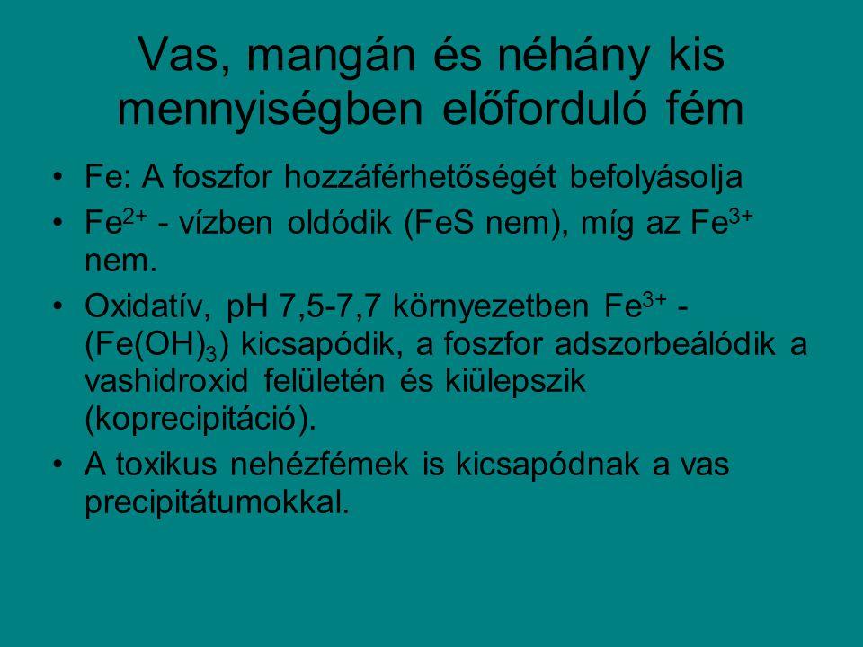 Vas, mangán és néhány kis mennyiségben előforduló fém Fe: A foszfor hozzáférhetőségét befolyásolja Fe 2+ - vízben oldódik (FeS nem), míg az Fe 3+ nem.