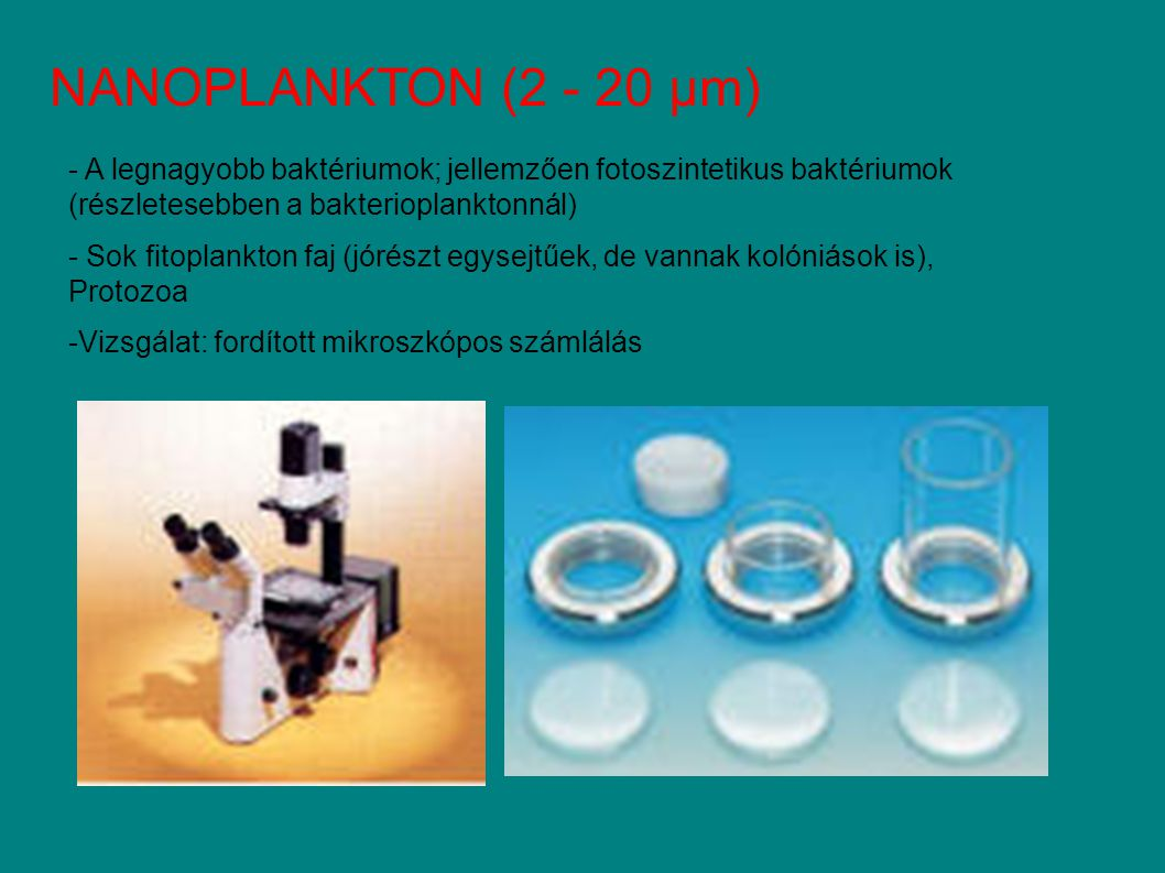 NANOPLANKTON (2 - 20 µm) - A legnagyobb baktériumok; jellemzően fotoszintetikus baktériumok (részletesebben a bakterioplanktonnál) - Sok fitoplankton faj (jórészt egysejtűek, de vannak kolóniások is), Protozoa -Vizsgálat: fordított mikroszkópos számlálás