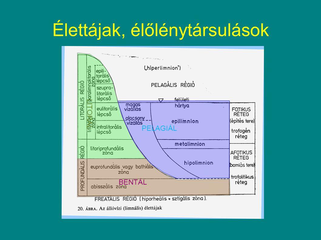 """Cyanoprokaryota, N 2 -kötés -NITROGENÁZ enzimkomplex -N 2 -kötést mennyiségileg mérni nehéz, mert a sok légköri N 2 """"bezavar ) -szubsztrátanalóg: acetilén -Jobban köti -Kizárólag anaerob körülmények közt megy végben, az oxigén mérgezi az enzimrendszert -Őslégköri bioszféra maradvány, ami """"talált másik szubsztrátot."""