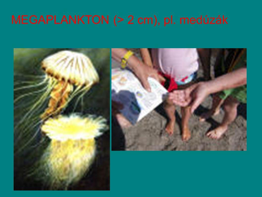 MEGAPLANKTON (> 2 cm), pl. medúzák