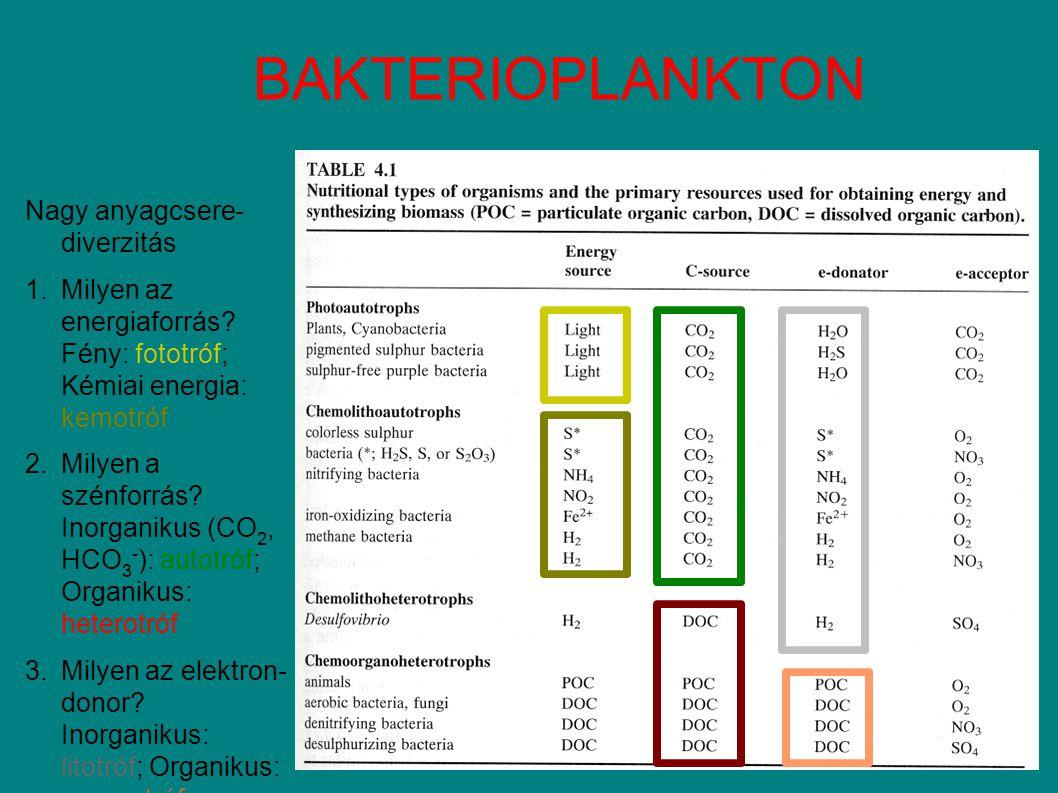 BAKTERIOPLANKTON Nagy anyagcsere- diverzitás 1.Milyen az energiaforrás.