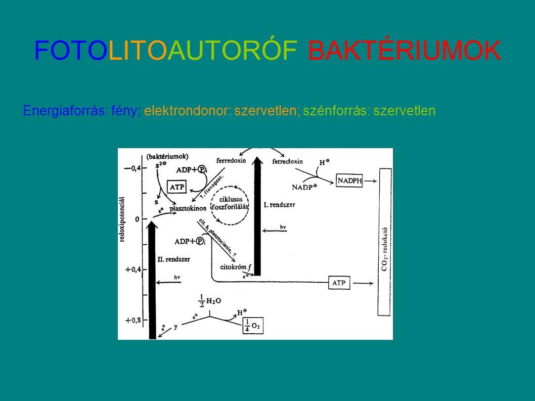 FOTOLITOAUTORÓF BAKTÉRIUMOK Energiaforrás: fény; elektrondonor: szervetlen; szénforrás: szervetlen