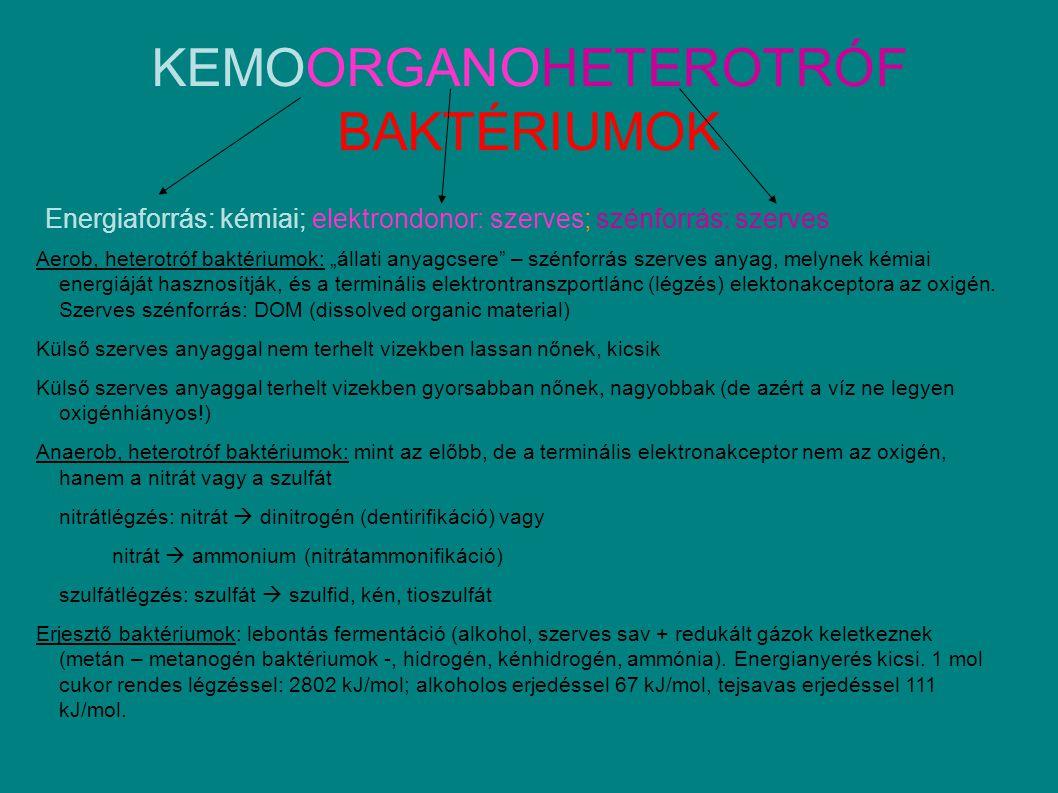 """KEMOORGANOHETEROTRÓF BAKTÉRIUMOK Energiaforrás: kémiai; elektrondonor: szerves; szénforrás: szerves Aerob, heterotróf baktériumok: """"állati anyagcsere – szénforrás szerves anyag, melynek kémiai energiáját hasznosítják, és a terminális elektrontranszportlánc (légzés) elektonakceptora az oxigén."""