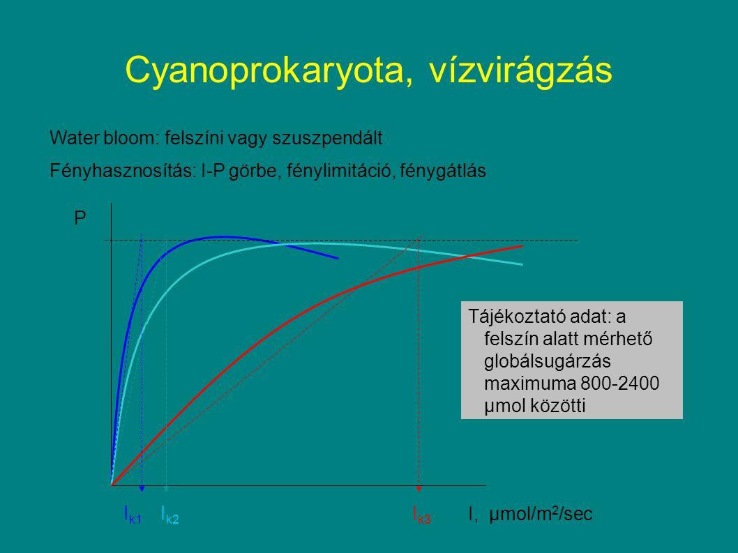 Cyanoprokaryota, vízvirágzás Water bloom: felszíni vagy szuszpendált Fényhasznosítás: I-P görbe, fénylimitáció, fénygátlás P I, μmol/m 2 /sec I k1 I k2 I k3 Tájékoztató adat: a felszín alatt mérhető globálsugárzás maximuma 800-2400 μmol közötti