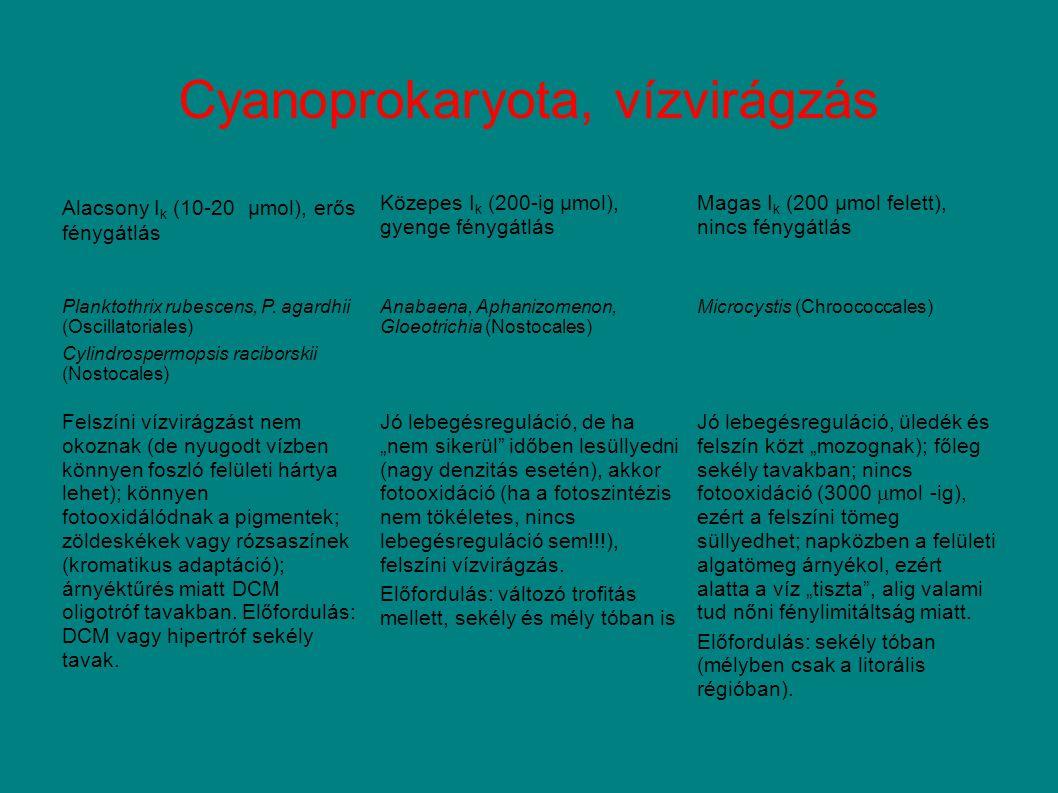 Cyanoprokaryota, vízvirágzás Alacsony I k (10-20 μmol), erős fénygátlás Közepes I k (200-ig μmol), gyenge fénygátlás Magas I k (200 μmol felett), nincs fénygátlás Planktothrix rubescens, P.