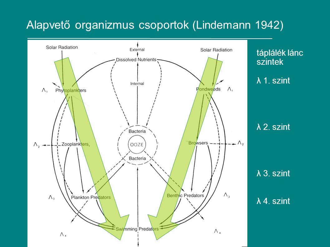 Alapvető organizmus csoportok (Lindemann 1942) táplálék lánc szintek λ 1.