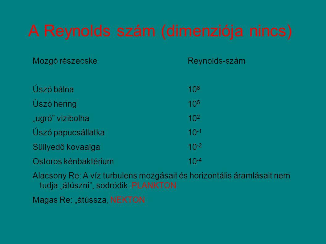 AUTOTRÓF PIKOPLANKTON Cyanobacteria: Synechococcus és Synechococcus-szerű sejtek Chlorophyta: Chlorella-szerű sejtek Számlálás fekete membránfilteren autofluoreszcenciát kihasználva (a klorofillt gerjesztjük) SYNECHOCOCCUSCHLORELLA