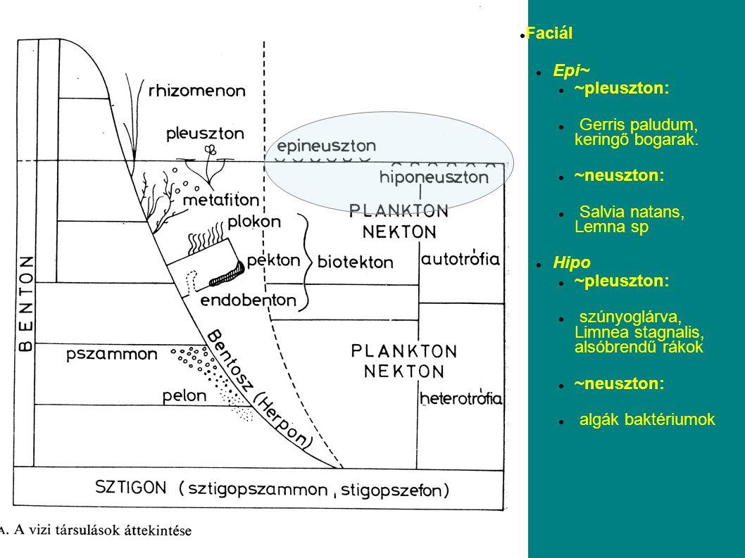 Fitoplankton, perifiton, makrofita konkurencia a fényért és a tápanyagokért (2 csoport – 2 forrás)
