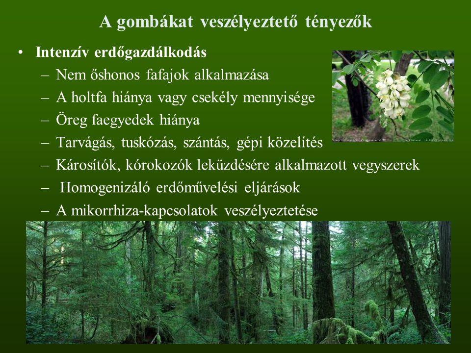 A gombákat veszélyeztető tényezők Intenzív erdőgazdálkodás –Nem őshonos fafajok alkalmazása –A holtfa hiánya vagy csekély mennyisége –Öreg faegyedek h